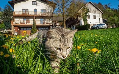 Bauernhof Waira Schauer-Zeitlhofer